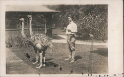 Man with Ostriches on Leashes Postcard