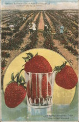 Growing Buckbee's Great Ruby Strawberries On Rockford Seed Farms Illinois Postcard