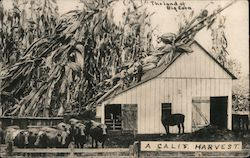 The land of Big Corn - A Calif. Harvest Postcard