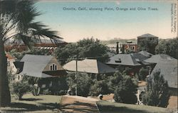 View of Town showing Palm, Orange and Olive Trees Postcard