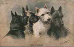 All Scotch - Four Scottish Terriers shown Postcard