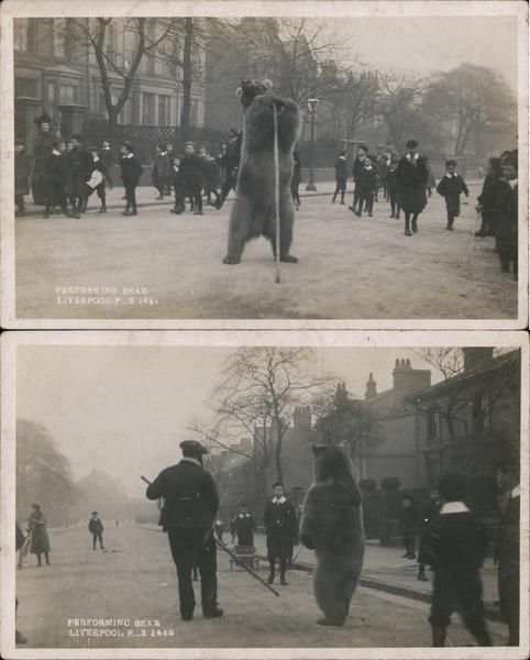 Set of 2: Performing Bear, Liverpool England Merseyside