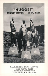 """Nugget"" Midget horse - 32 in. tall. Alohaland Pony Circus Postcard"