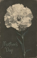 Mother's Day - White Carnation Postcard