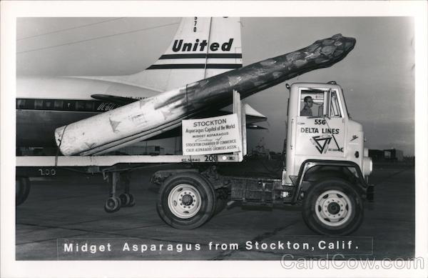 Midget Asparagus from Stockton, Calif. California Exaggeration