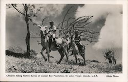 Children Riding Native Burros at Caneel Bay Plantation