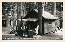 Housekeeping under Big Trees Postcard