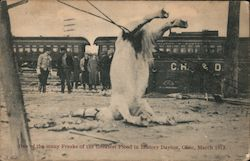 One of the many freaks of the greatest flood in history March 1913 Postcard