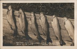 Beauties from headwaters Middle Fork near June Lodge Postcard