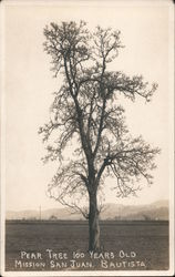 100 Year Old Pear Tree Postcard