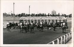 Fairgrounds, Horse Racing Postcard