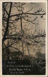 Icicles on Limb of Tree, January 1913 Postcard