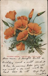 "California Poppies ""Copa de Oro"" (Cup of Gold) Postcard"