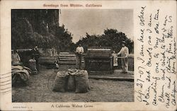A California Walnut Grove Postcard