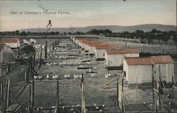 One of Sonoma's poultry farms.