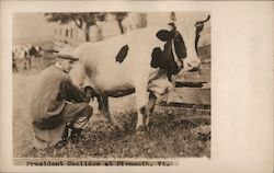 President Coolidge Milking a Cow Postcard