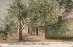 Luther Burbank's Santa Rosa Grounds Postcard