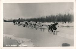 Alaska Dog Team Postcard