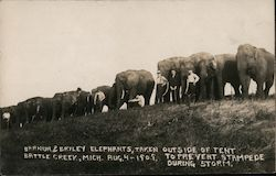 Rare:1909 Barnum & Bailey elephants, taken out of tent to prevent stampeded during storm Postcard