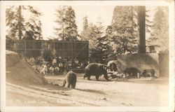 Lunch Time: audience watching bears at Sequoia National Park, California Postcard