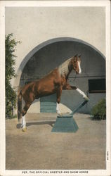 Pep, The Official Greeter And Show Horse at W. K. Kellogg Arabian Horse Ranch Postcard