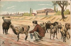 A Greek peasant milking his goats Postcard