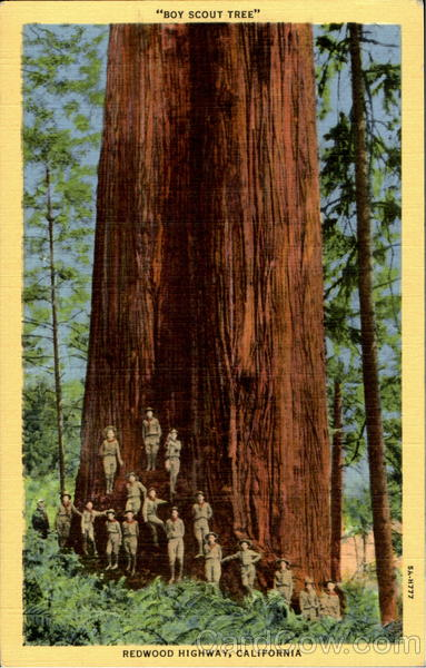 Boy Scout Tree, Redwood Highway Big Trees California