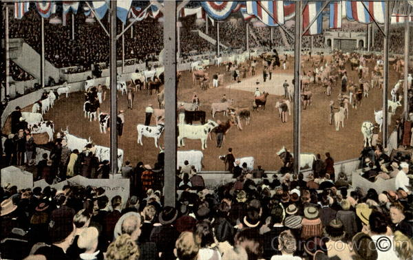 Parade Of Champion Cattle In Hippodrome Waterloo Iowa