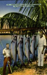 Tarpon Caught In The Fisherman's Paradise