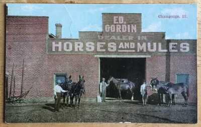 Zimmerman Postcard. Ed Gordin Dealer In Horses & Mules Champaign, Illinois