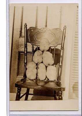 Real Photo Postcard RPPC - Harvest Display Six Potatoes 12 lbs 2 oz on Chair