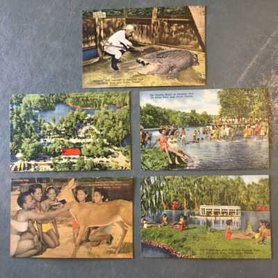 5 Ocala Florida Paradise Park Silver River Swimming Black Americana Post Cards