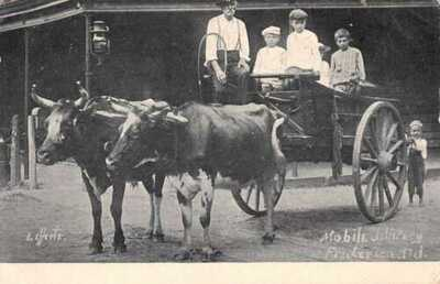 Frederica Delaware Children in Bull Cart Vintage Postcard AA17206