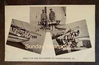 CHINCOTEAGUE VA Duck Hunt Postcard to Capt A W Dunton MAGOTHA VA