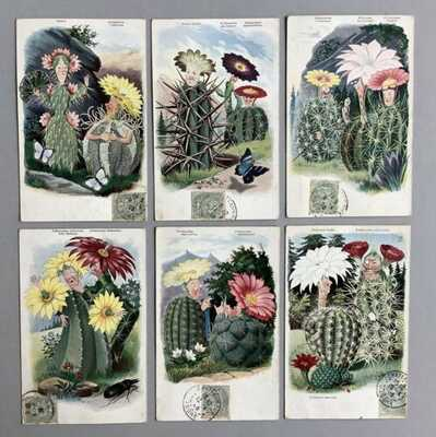 Early Fantasy Postcards (6) Fabulous Animated Cacti,Identified By Botanical Name