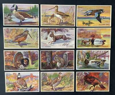 "Vintage Advertising Postcards (12) ""Shoot DuPont Powders"" Fowl, Rabbit, Squirrel"