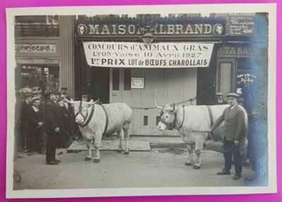 Photo 1927 Toulon Boucherie Parisienne Albrand - Aujas Place du Théatre Rare