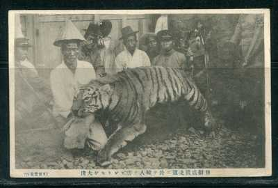 Korea CHOSEN Tiger Hunting PPC  (咸北 大虎 사냥)