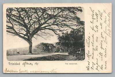 The Savannah TRINIDAD Antique UDB Postcard~Stamp Cover to England 1904
