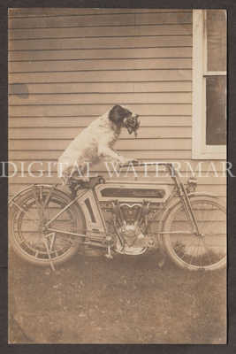 RPPC Early Belt-Drive Excelsior Motorcycle & Trick Dog Portrait  V. Fine Cond.