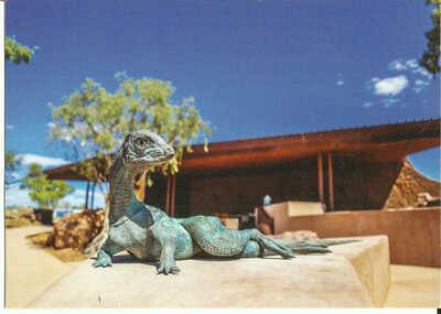 Postcard - Dinosaur, Ornithopod, Winton, Qld