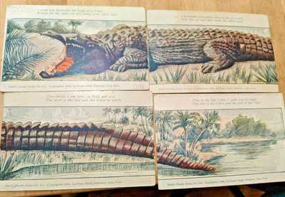 Huld's Puzzle Series postcard 1906 Series 1a - d complete Alligator