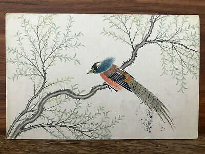 CHINA OLD POSTCARD HAND PAINTED BIRD TREE PEKING TO GERMANY 1912 !!