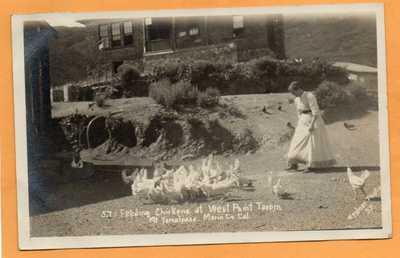 West Point Tavern Mount Tamalpais Marin County Cal 1908 Real Photo Postcard