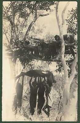 ABORIGINAL TREE BURIAL, CEDUNA SOUTH AUSTRALIA, RPPC c1920 by KREUSLER MURAT BAY