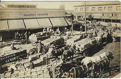 Shipping Grapes, TURLOCK, CAL. ~ RPPC ~ Hultberg Lane Block ~ STANISLAUS COUNTY