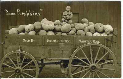 Some Pumpkins Sold by Miller & Ramsey, SABETHA, KAN. ~ RPPC ~ c.1909