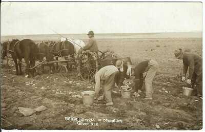 Potato Digger in Operation, CULVER, ORE. ~ Jefferson County, Oregon ~ RPPC