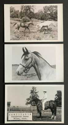 3 Horses Woodbrook Farms Niles MI Michigan Vintage Real Photo Postcards RPPC