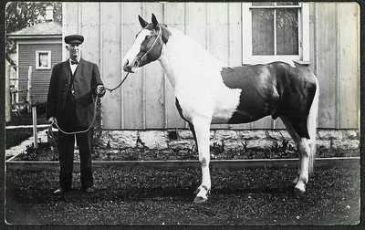 Naperville Illinois Veterinarian Doctor E. S. Fry & Fine Horse, 1910 RPPC DJ